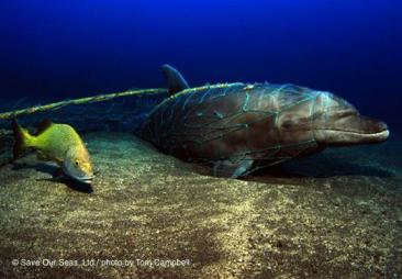 ghost net dolphin