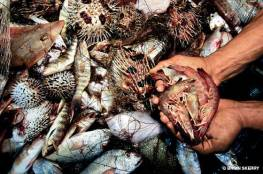 bycatch-a-fisherman-holds-the-shrimp-he-caught-in-his-bottom-trawl-net-after-towing-it-for-an-hour-the-other-dead-animals-are-bycatch-thrown-back-into-the-sea-as-trash-brian-skerry