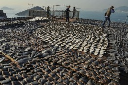 shark-finning-agence-france-presse-getty-images-shark-fins-drying-in-the-sun-cover-the-roof-of-a-factory-building-in-hong-kong-on-january-2013