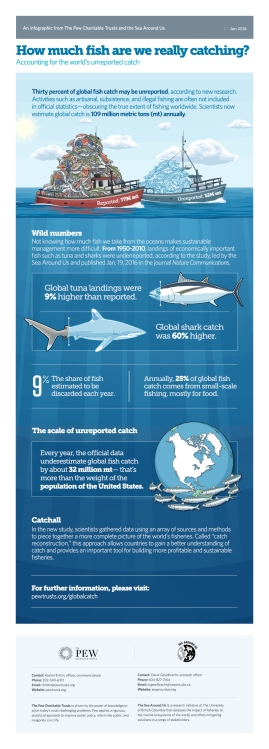 overfishing-how-much-fish-are-we-really-catching