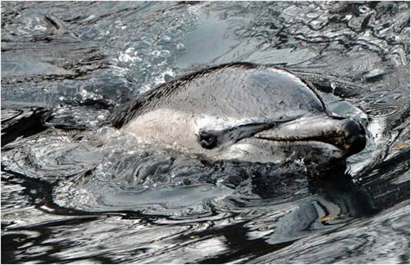Dolphin dies from toxic waste.