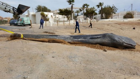Yet Another Dead Whale Is Grave Reminder Of Our Massive Plastic
